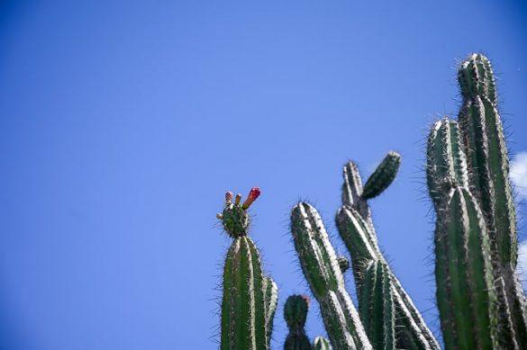 visok in ozek kaktus puščava Tatacoa
