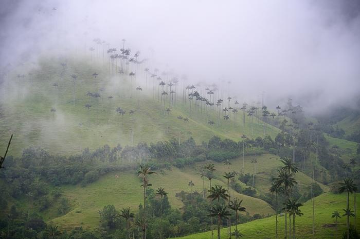 Valle de Cocora, zavita v meglo.