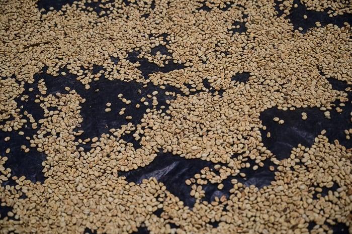 kolumbijska kava se suši