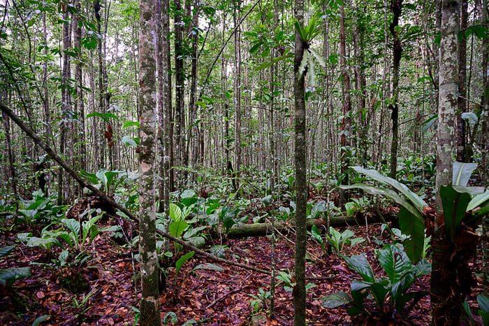 venezuelska džungla