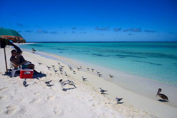 galebi na karibski plaži otoka Madrisky