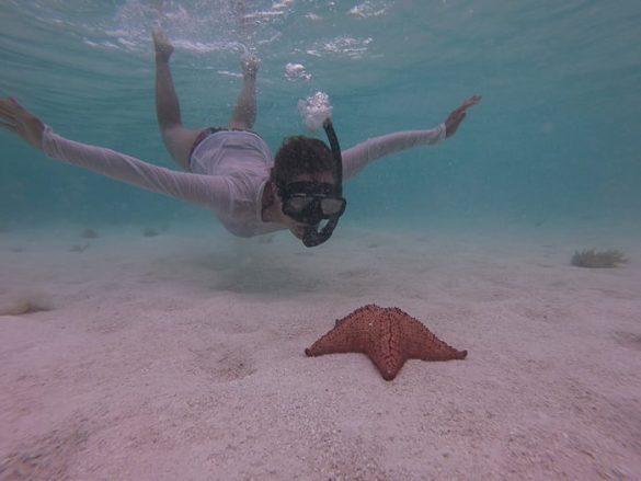 potapljač in morska zvezda
