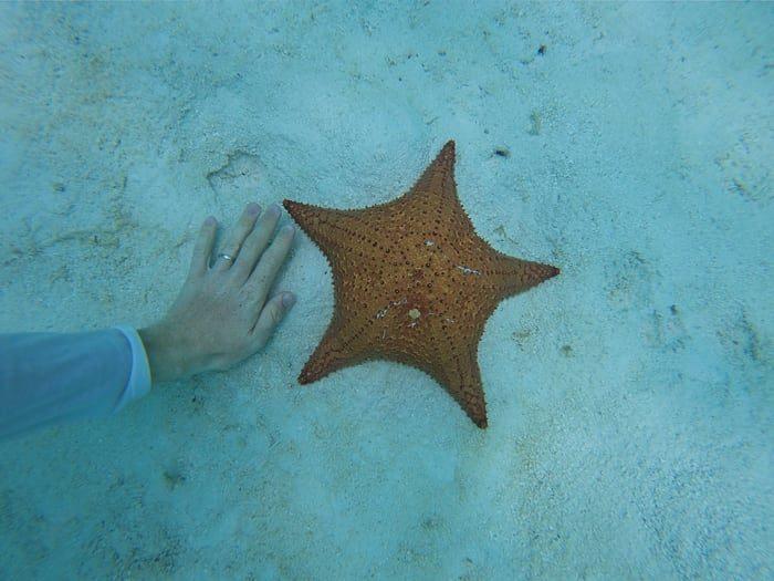 morska zvezda in dlan za primerjavo velikosti