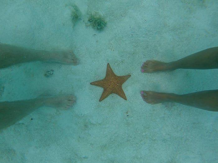 morska zvezda