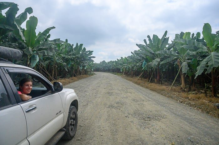 nasad banan v Ekvadorju
