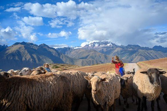 perujska ženska s čredo ovac