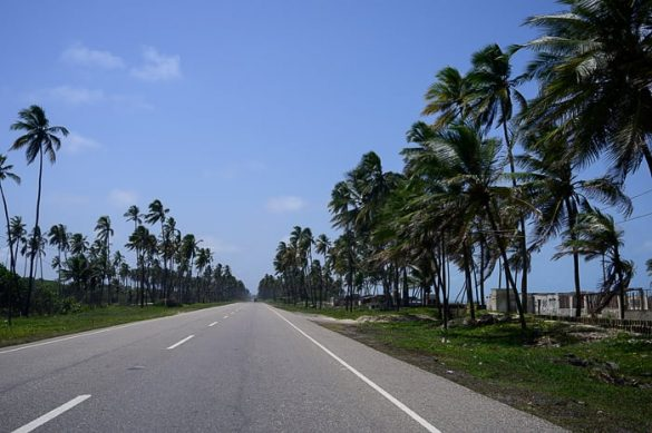 cesta med palmami