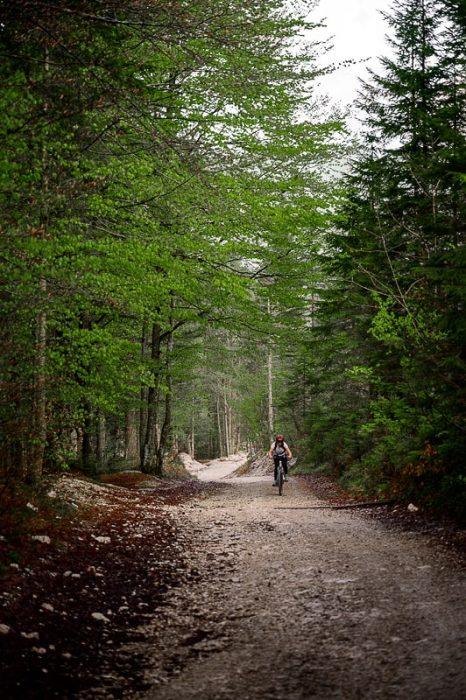 ženska kolesari po gozdni poti