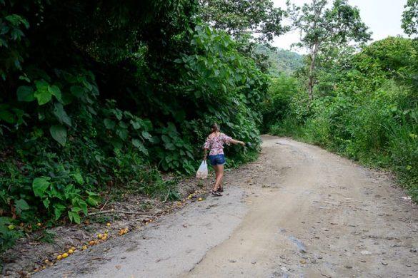 Ženska nabira mango v Kolumbiji