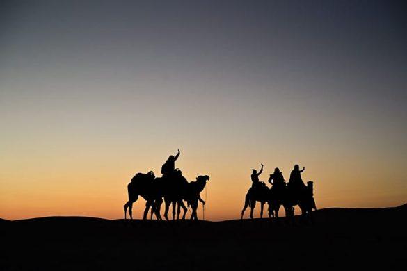 karavana kamel v Sahari
