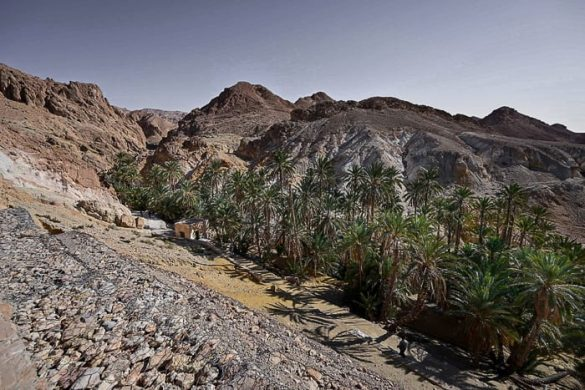 oaza sredi kamnite puščave