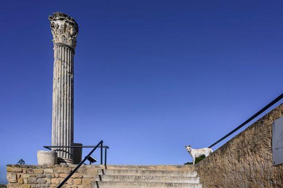 rimski steber in potepuški pes. Kartagina, Tunizija