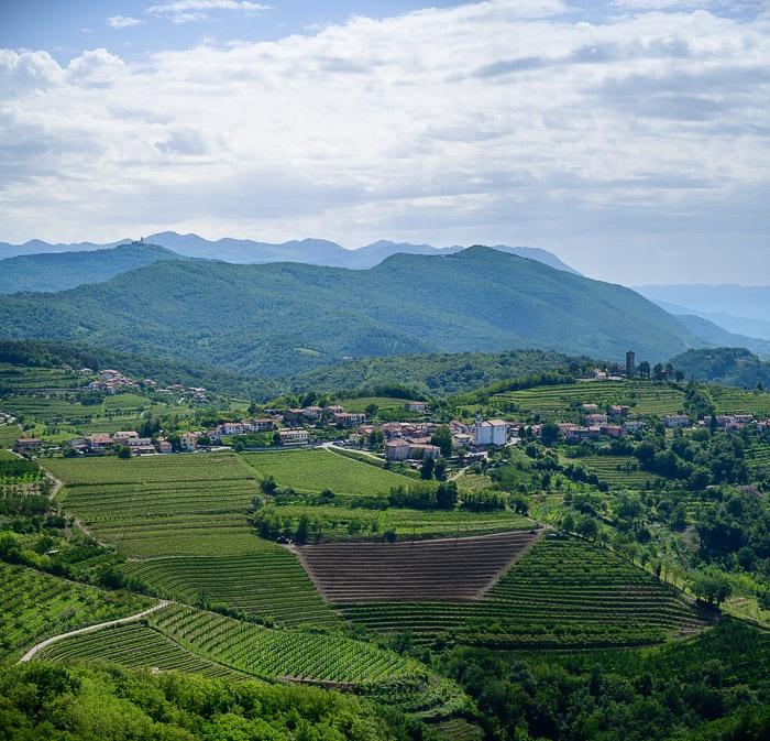 gričevnata pokrajina prerasla z vinogradi