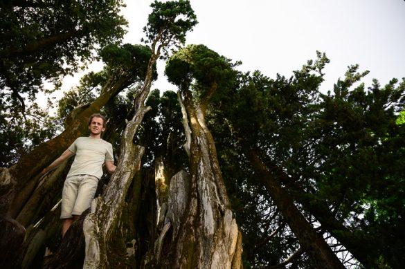moški pod drevesom