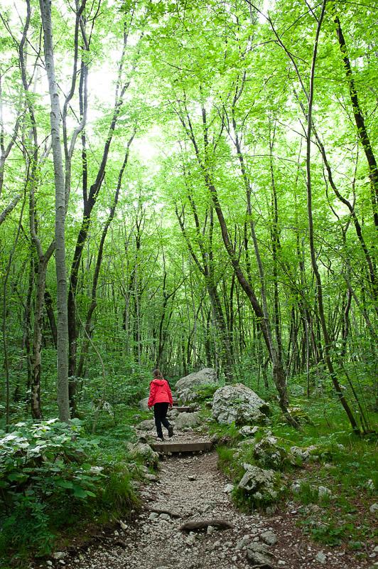 ženska v rdeči jakni hodi po potki pod krošnjami dreves