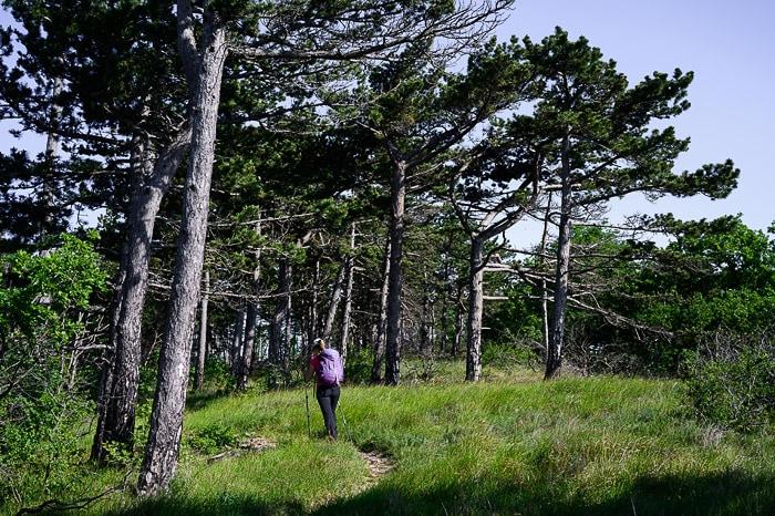 ženska hodi pod borovci