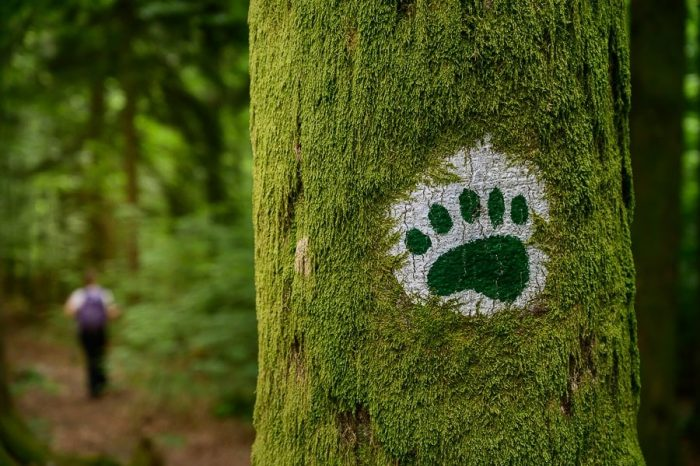 markacija medvedova šapa