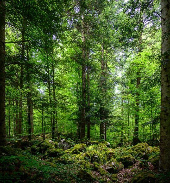 kočevski rog: temen in preraščen gozd