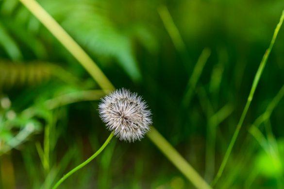 mala cvetlica na zeleni podlagi
