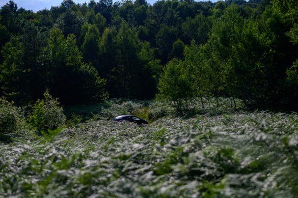 polje praproti - steljniki