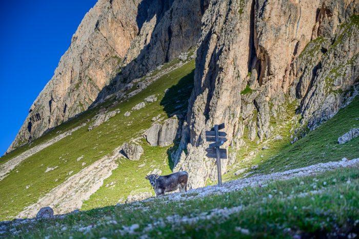 krava poleg smerokaza v gorah