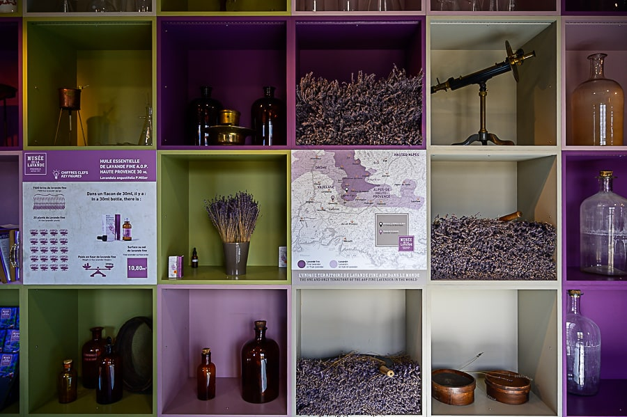 razstavna polica v muzeju sivke. Posušena sivka in zemljevid rastnega območja sivke