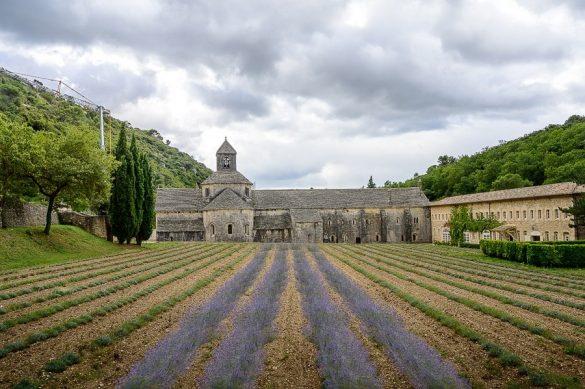 samostan Abbaye de Notre Damme de Senanque in polje sivke pred njim