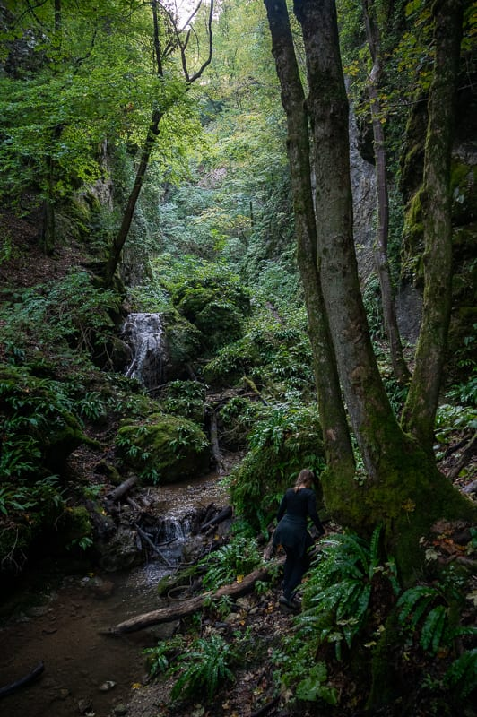 potok v zelenem gozdu