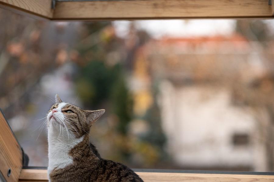 mačka na okenski polici