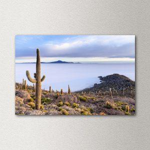 stenska slika: kaktus, salar de uyuni