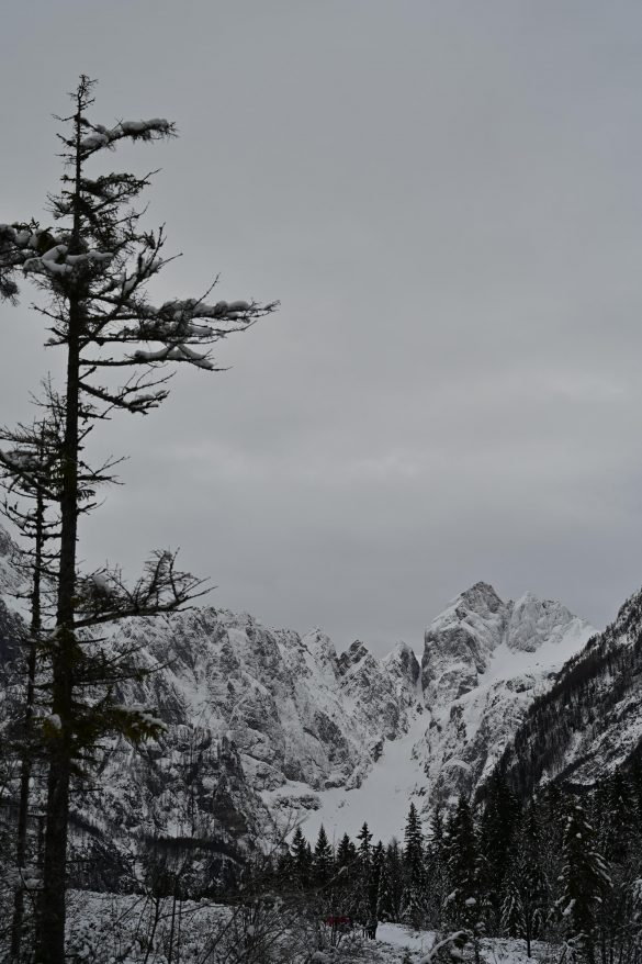 zasnežena gora Jalovec