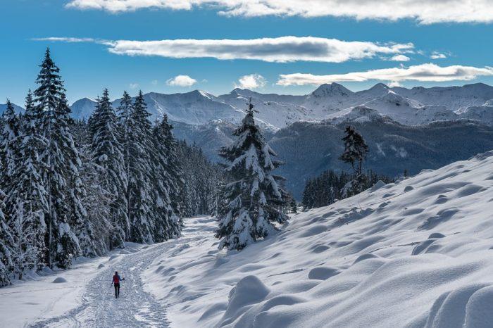 ženska hodi po snežni gazi po Pokljuki. Zasnežena pokrajina