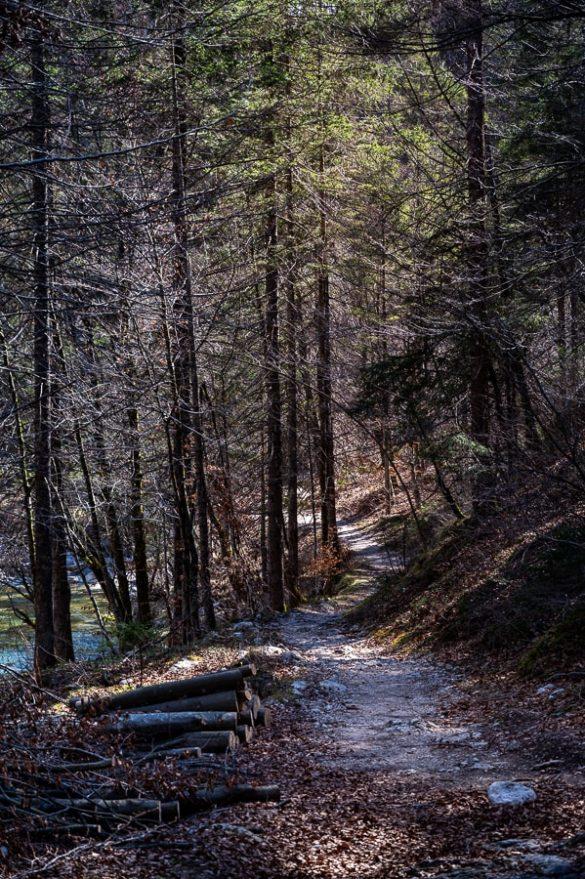 gozdna potka, korita mostnice