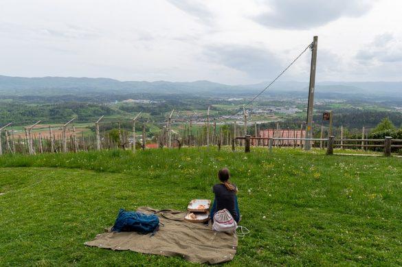 piknik med vinogradi