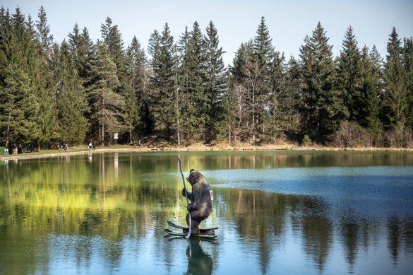 Medved na smučeh, Bloško jezero
