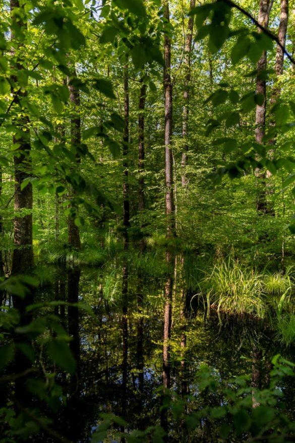 Poplavljen Krakovski gozd