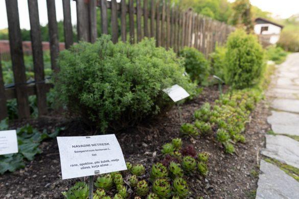 zeliščni vrt z napisi in urejenimi grdicami