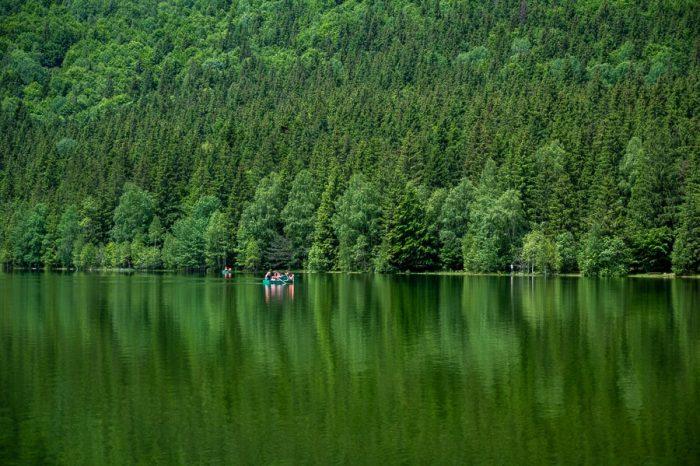 jezero zelene barve z zelenimi smrekami v ozadju