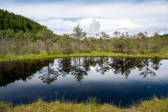 Črna, šotna jezera s popolnim odsevom dreves