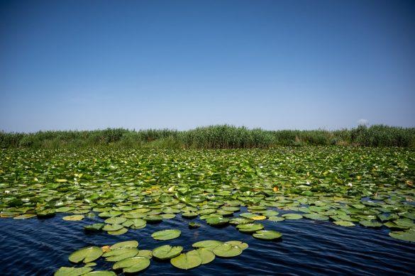 lokvanji na jezeru, delta donave