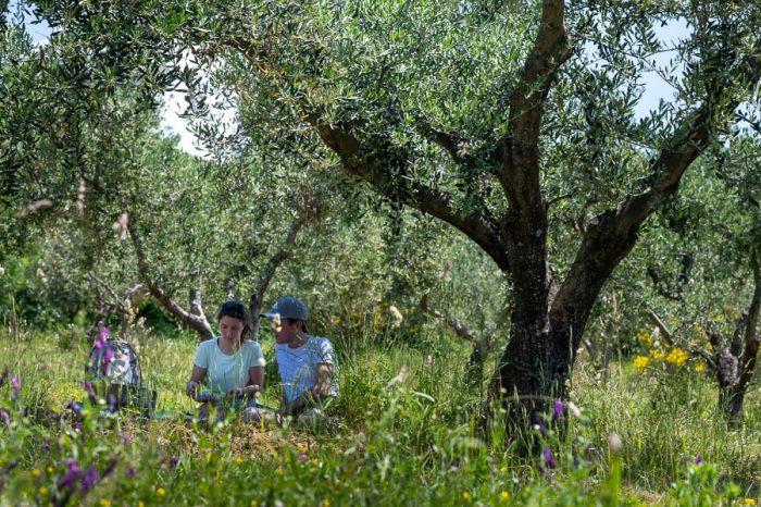 moški in ženska imata piknik v nasadu oljk nad Izolo