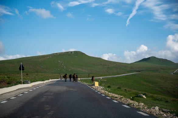konji tečejo po gorski cesti na planoti Bucegi