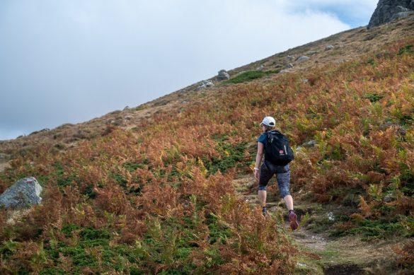 ženska hodi skozi oranžno-rjavo praprot proti Punta la Marmora, najvišja gora Sardinije